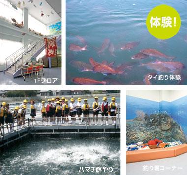 体験 マーレリッコ潜水艦 タイ釣り体験 マーレリッコイメージ
